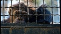 Zoos: the life of animals in captivity | An undercover investigation by Animal Equality