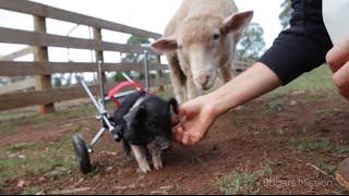 All Animals Deserve a Chance