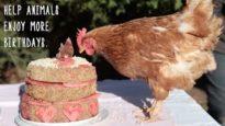 Animal Birthdays!