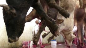 Animals Choking on Their Own Blood: What The Mexican Government Doesn't Want You to See
