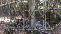Animals Suffering at Deer Haven Mini Zoo