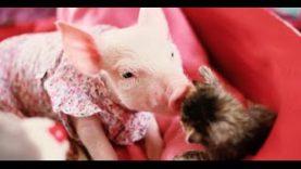 Awww! Baby Animals!!