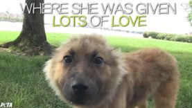 Cute Puppy Ariel's Story of Courage