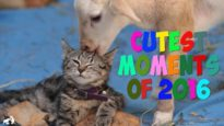 Cutest Moments of 2016