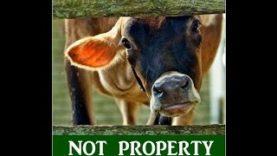 Decornazione – Le Mostruosità dell'industria del latte