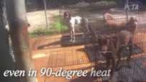 Dogs Caged Without Water, Bullied at Florida Kennel