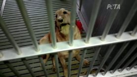 Dogs in Agony at University Need Your Help