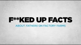 Factory Farm Fathers