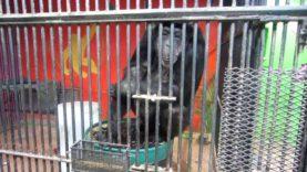 Hallmark Profits From Abused Chimpanzees