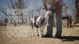 Hope the Blind Goat