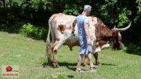I cowboy del rodeo sono psicopatici malati e perversi che godono a tormentare gli animali