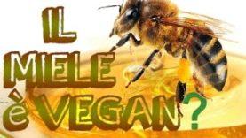 Il Miele è Vegan? Sano? Etico?