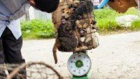 Inferno sulla Terra – Commercio di carne di cane in Thailandia.sub ita