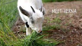 Meet Verna