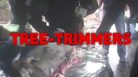 Military Trauma Training on Animals