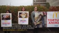 Over 250,000 Signatures Delivered to McDonald's
