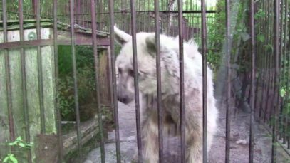 Rescued Bear's Shocking Transformation