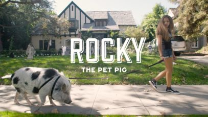 Rocky the Pet Pig