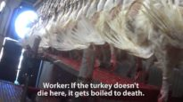 This Will Make You Think Twice About Your Turkey Sandwich