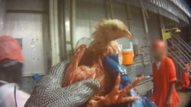 Watch: Tyson Caught on Hidden Camera Ripping Heads Off Live Animals