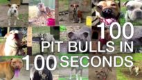 100 Pit Bulls in 100 Seconds