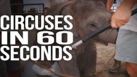 Circuses in 60 Seconds Flat