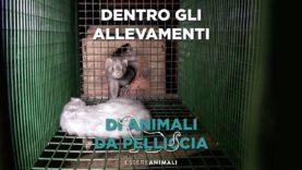 Essere Animali: dentro gli allevamenti di animali da pelliccia