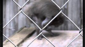 9 Animals Driven Insane