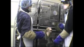 AirCruelty: Inside the Labs of Two of the Largest U.S. Primate Importers