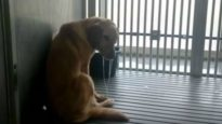 Dogs at Texas A&M Bred to Suffer