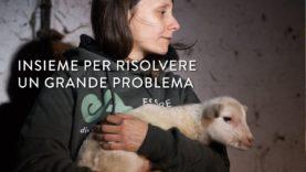 Insieme per risolvere un grande problema – Essere Animali