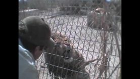 Misery and Cruelty at G.W. Exotic Animals Memorial Park in Oklahoma: A PETA Investigation