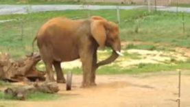 No Elephant Deserves to Be Alone