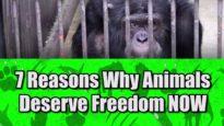 7 Reasons Animals Deserve Freedom Now