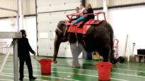 Garden Bros. Circus Forces Lame and Distressed Elephants to Perform