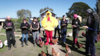 International Respect for Chickens Day