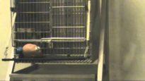 Oregon National Primate Research Center's Cruel Mr. Potato Head Experiments