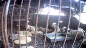 2014 – Il video di un anno assieme ad Animal Equality