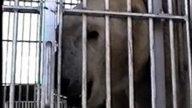 Footage of Suarez Bros. Circus Cruelty to Animals