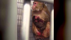 Baby Animals in Laboratories in 60 Seconds Flat