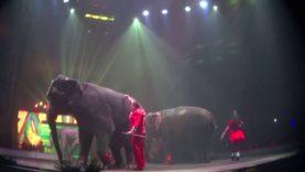 Bullhook Use and Pacing Tiger at UniverSoul Circus