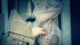 Petra: salvata dal trita galline!