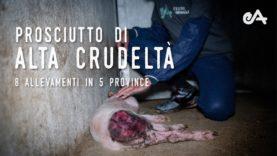 Prosciutto di Alta Crudeltà – Un'indagine di Essere Animali