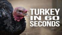 Turkey in 60 Seconds