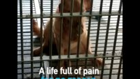 Dogs Are STILL Being Experimented On for No Reason