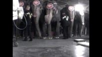Elephants in Circuses: Training & Tragedy