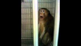 Imprisoned and Poisoned: A PETA Whistleblower Case