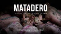 Matadero. Lo que la industria cárnica esconde. // Documental.