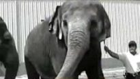 The Truth About Ringling Brothers Circus