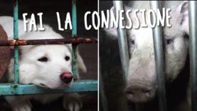 Cani o maiali? Fai la connessione